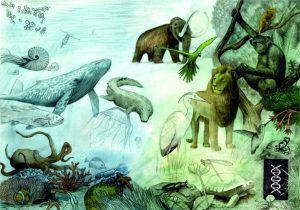 Evolution by Finn Clark