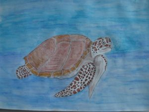 Plastic Free by Jenny Rutland